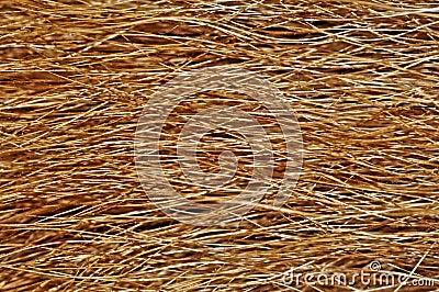 Tła zakończenia psa krańcowy futerkowy tekstury widok
