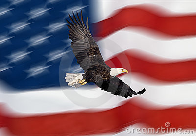αμερικανικό φαλακρό πετών&t