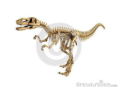 T-Rex skeleton isolated