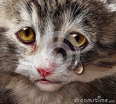 imagine stock despre  animale abuz