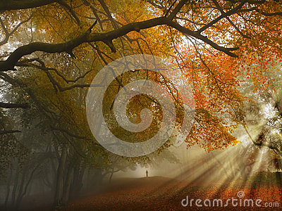 stock image of  autumn forest path