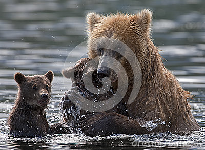 stock image of  bear