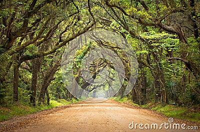 stock image of  botany bay spooky dirt road creepy oak trees