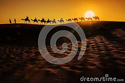 stock image of  camel caravan