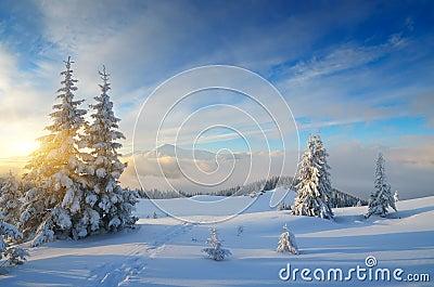 stock image of  christmas landscape