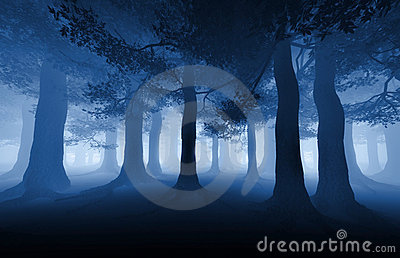 stock image of  dark forest