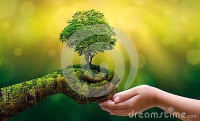 imagine stock despre  mediu pământ zi brățea copaci verde fundal feminin mână deţine copac natura câmp