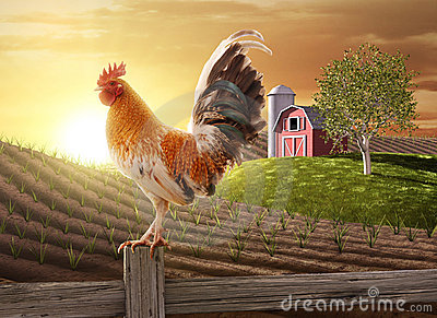 stock image of  farm fresh morning