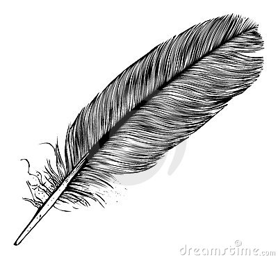 stock image of  feather
