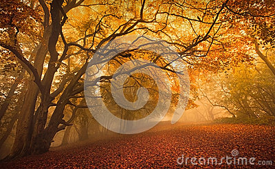 stock image of  golden fall season forest