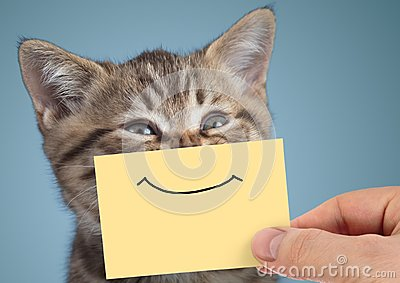 stock image of  happy cat closeup portrait with funny smile on cardboard