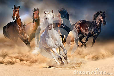 stock image of  horse herd run