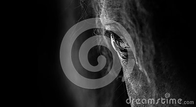 stock image of  horse