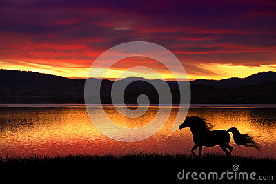 stock image of  horse and sunset