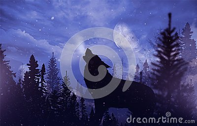 stock image of  howling wolf in wilderness