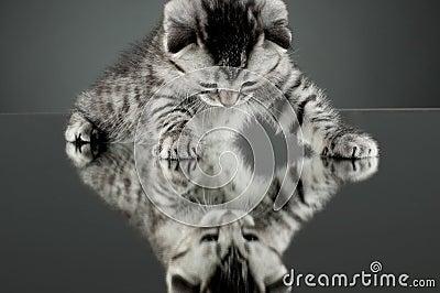 stock image of  kitten