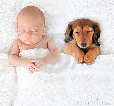 stock image of  newborn baby and puppy