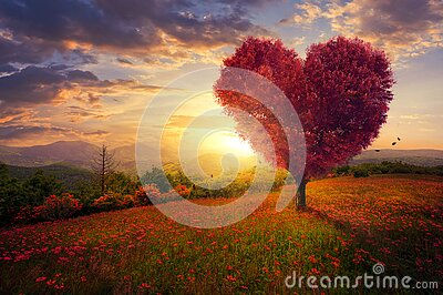 stock image of  red heart shaped tree