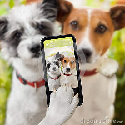 stock image of  selfie dogs
