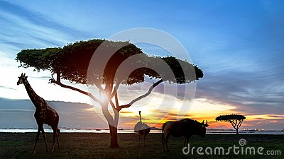 stock image of  south africa of silhouette african night safari scene with wildlife animals