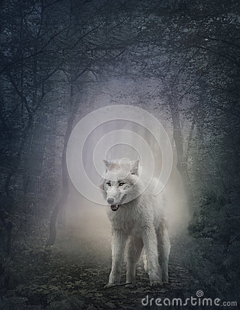 stock image of  white wolf