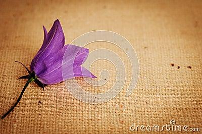Tła bellflower burlap purpury vignetted