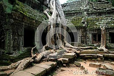Ta Prohm Angkor Wat