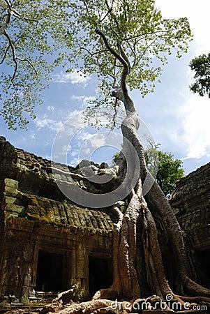 Free Ta Prohm, Angkor Wat, Cambodia Royalty Free Stock Images - 3596219