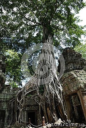 Free Ta Prohm, Angkor Wat, Cambodia Stock Photography - 3596252