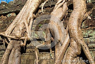 Ta Prohm, Siem reap, Cambodi