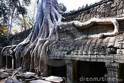 Ta Prohm temple,Angkor
