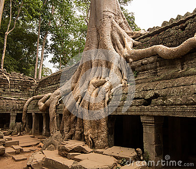 Ta Prohm Temple in Angkor Thom Cambodia