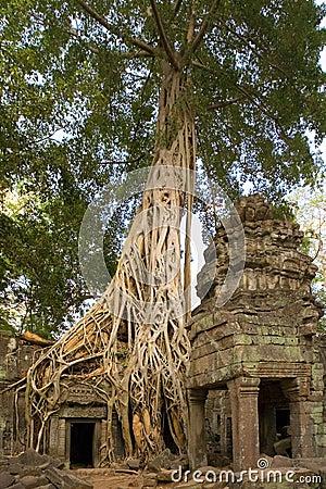Ta Prohm Temple - Angkor Wat - Cambodia