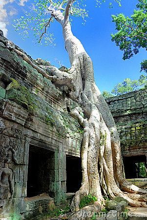 Ta Prohm Temple, Cambodia Series 01