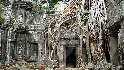 Ta Prohm Temple Siem Reap Cambodia- Ancient Angkor