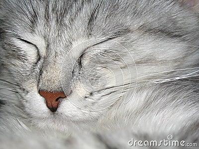 Ta sig en tupplur för katt