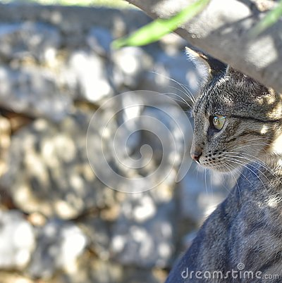 Free Tabby Cat Stock Image - 100288161