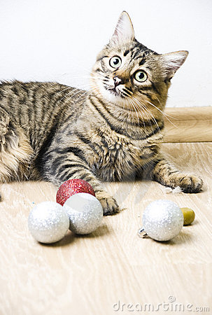 Free Tabby Cat Royalty Free Stock Photography - 17159007