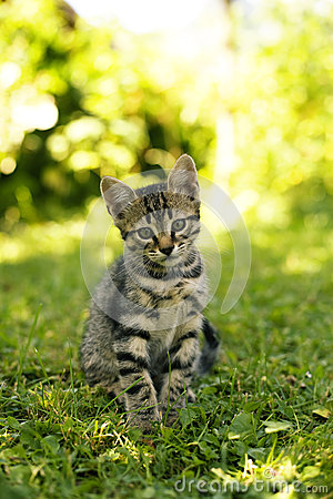 Free Tabby Cat  Royalty Free Stock Photography - 25835347