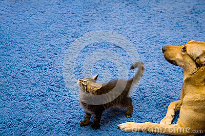 Tabby cat and dog