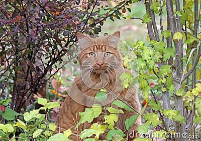 Tabby Cat in a Garden