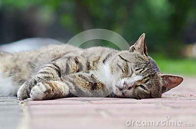 Tabby cat sleep