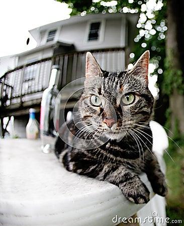 Tabby cat on a table