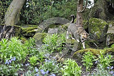 Tabby Cat Walking Along Rocks