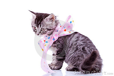 Tabby cat wearing a pink ribbon