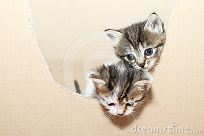 Tabby cats