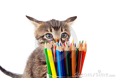 Tabby kitten sniffing color pencils