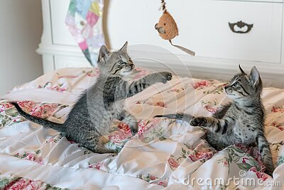 Tabby Kittens On Floral Comforter Free Public Domain Cc0 Image