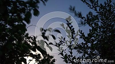 Tag zu Nacht hinter Bäumen stock video
