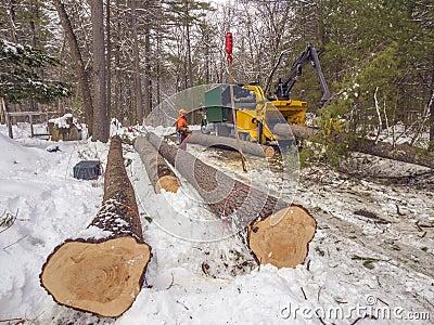 Taglio dell albero